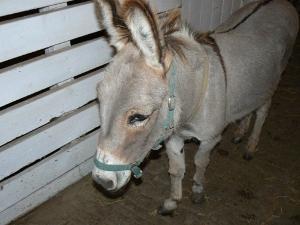 In Memoriam - The PrimRose Donkey Sanctuary
