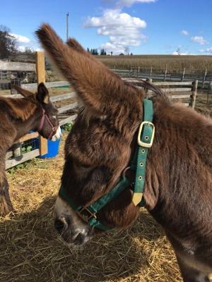 Adoption Corner - The PrimRose Donkey Sanctuary