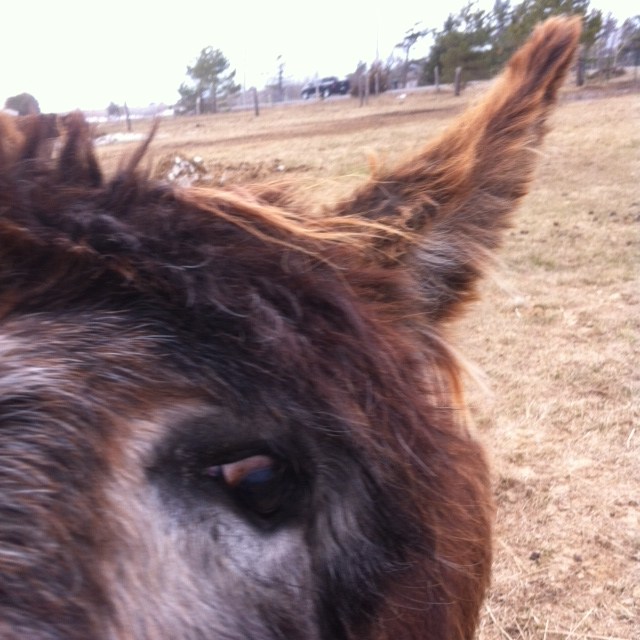 A 'selfie' of Chester donkey