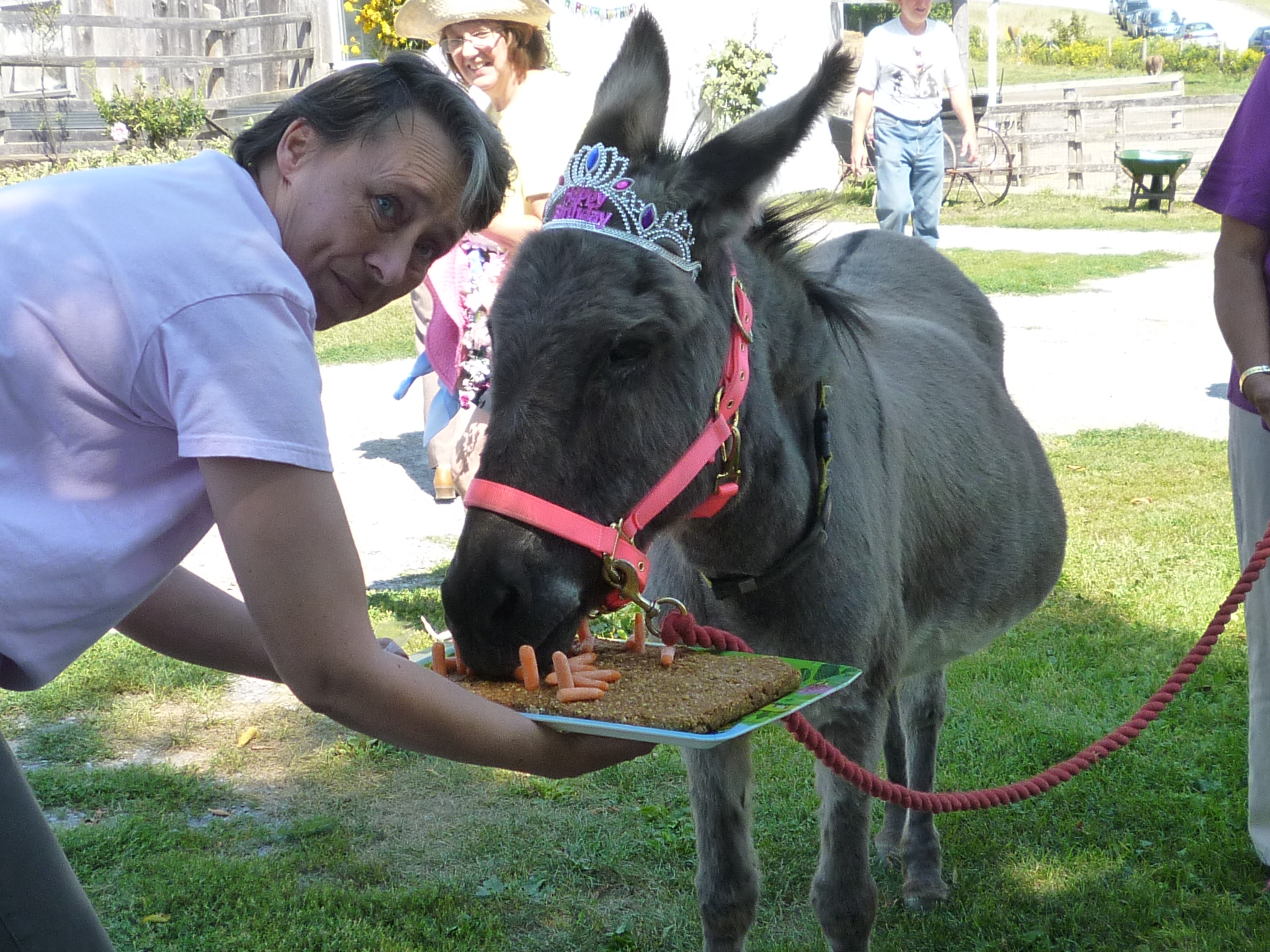 PrimRose munching on her carrot cake at her birthday party